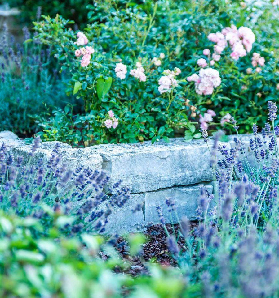 Lavendel bei Gartengestaltung