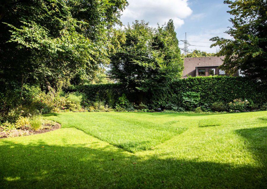 Große Rasenfläche bei Gartengestaltung in Düsseldorf